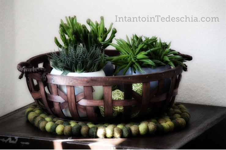 piante grasse ciotola legno