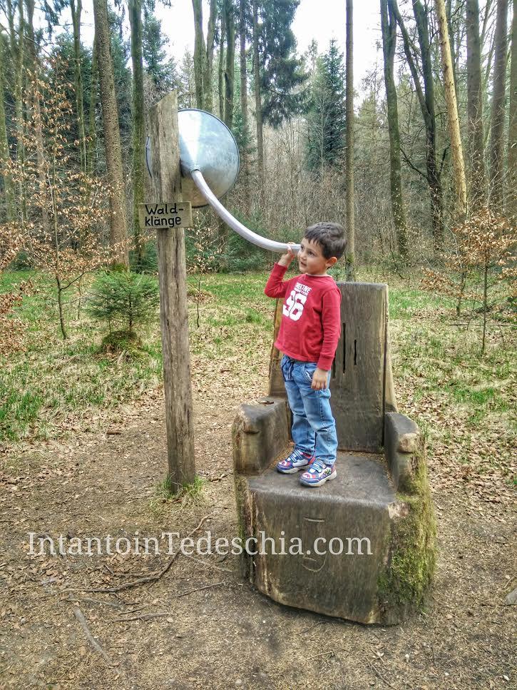 Foresta Baviera Boschi Tempo Libero Germania